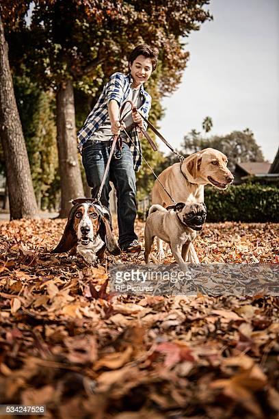 Teenage boy (13-15) walking three dogs in autumn park