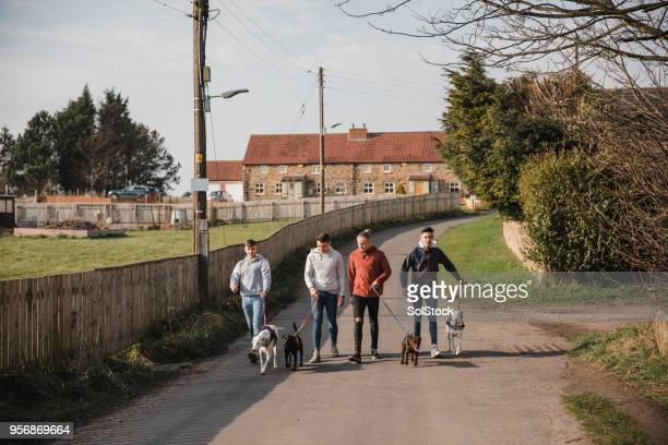 teenage boys walking their dogs - northwest england stock pictures, royalty-free photos & images