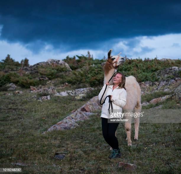 adolescente et un lama dans les montagnes - lama photos et images de collection