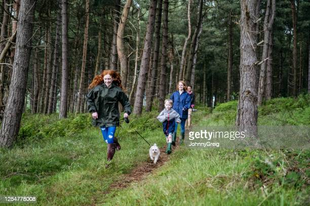 teenage girl and dog leading family on hike through forest - family stock pictures, royalty-free photos & images