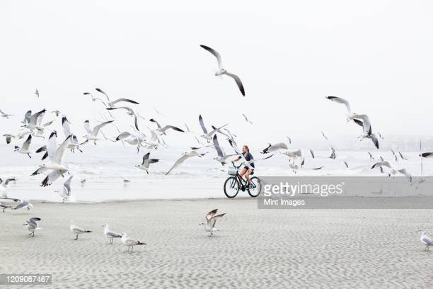 a teenage girl biking on a sandy beach by the ocean - real life stock pictures, royalty-free photos & images