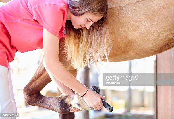 Teenage girl cleaning hoof of a horse