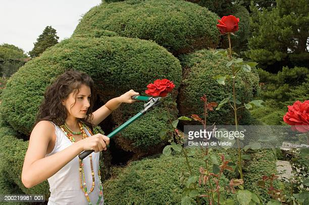 Teenage girl (16-18) cutting roses with pruning shears, side view