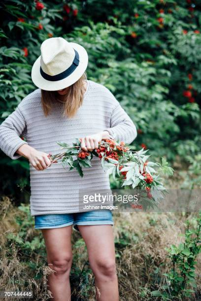 teenage girl cutting rowan tree branch - looking down her blouse stock photos and pictures