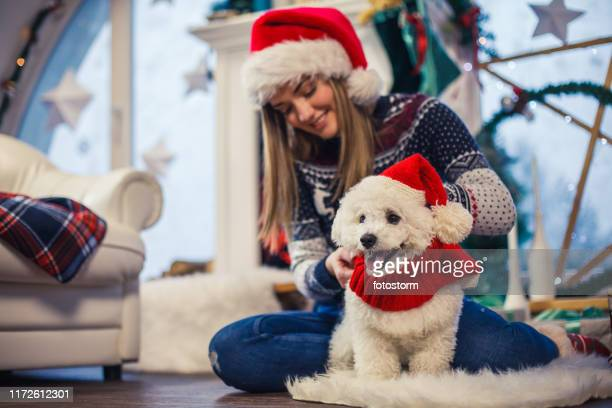tiener meisje dressing haar hond in kerst kleding - christmas jumper stockfoto's en -beelden