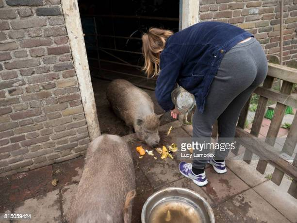 teenage girl feeding fruit peels to pet pigs - one teenage girl only stock pictures, royalty-free photos & images