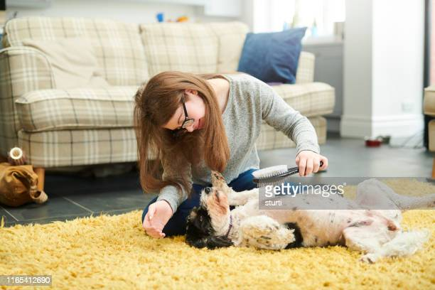 teenage girl grooming her dog - hairy girl stock pictures, royalty-free photos & images