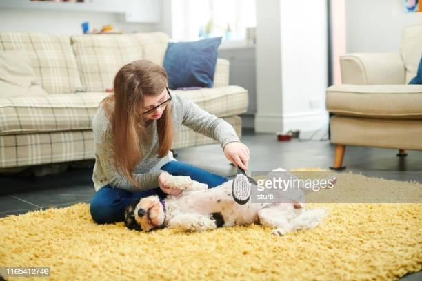 adolescente grooming seu cão - penteando - fotografias e filmes do acervo