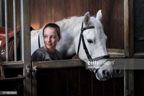 teenage girl horse rider with a grey horse outside a stable, adjusting the girth and saddle. - 手綱 ストックフォトと画像