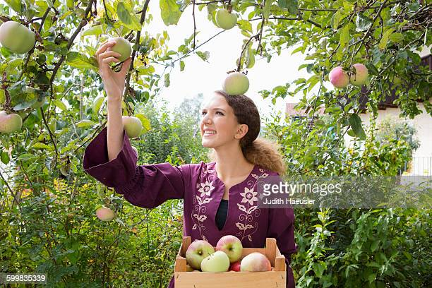 Teenage girl picking apples in orchard