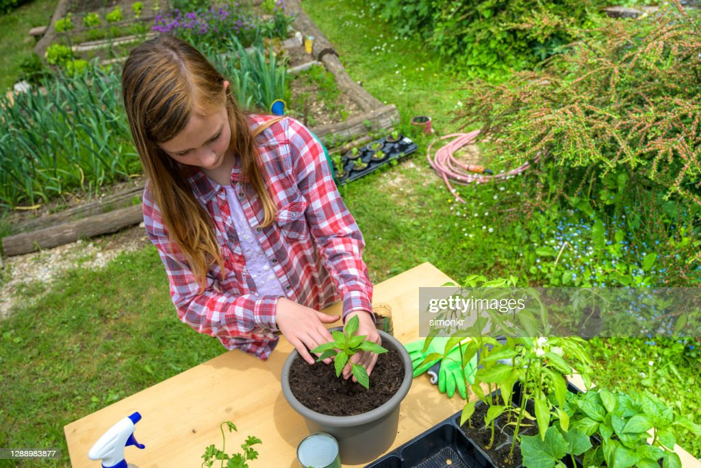 Teenage Girl Planting Seedling In Plant Pot High-Res Stock