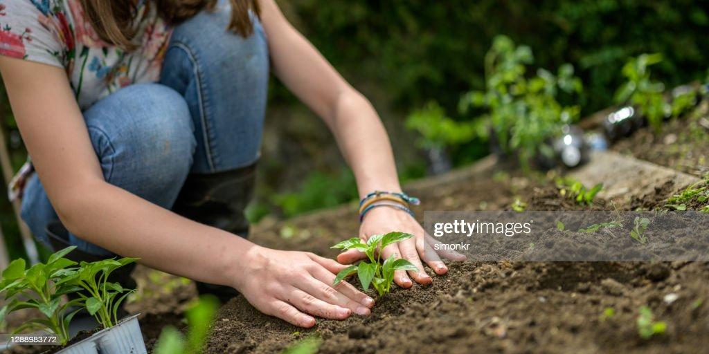 Teenage Girl Planting Seedling High-Res Stock Photo