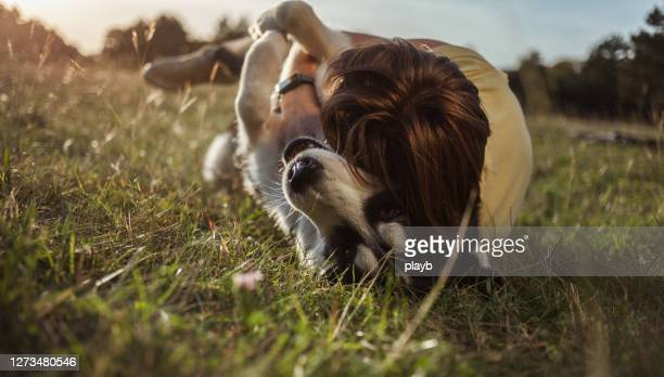 teenage girl playing with husky dog outdoors - emotional support stock pictures, royalty-free photos & images