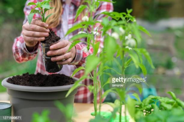 teenage mädchen repotting pflanze im garten - offen allgemeine beschaffenheit stock-fotos und bilder