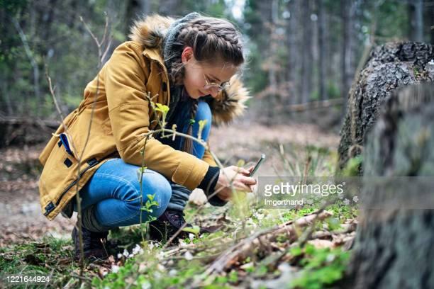 tiener die foto's van de lentebloemen in bos neemt - 14 15 jaar stockfoto's en -beelden