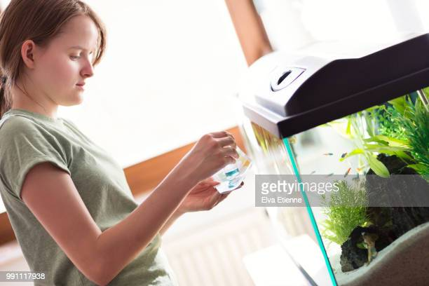 teenage girl testing the water of a home aquarium - ph value stock pictures, royalty-free photos & images