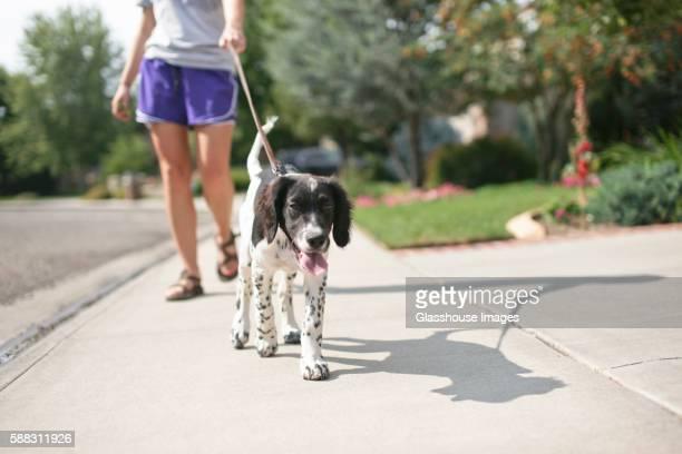 teenage girl walking dog - filhote de cachorro - fotografias e filmes do acervo