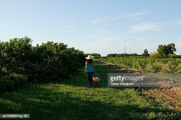 Teenage girl (16-17) walking with basket through peach orchard
