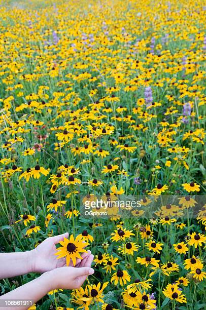 teenage girls hands in a field of yellow wildflowers. - ogphoto stock photos and pictures