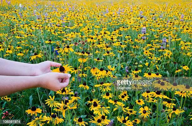 weibliche teenager hände in ein feld von gelbe wildblumen. - ogphoto stock-fotos und bilder