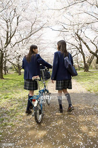 Teenage girls walking pathway lined with cherry trees, rear view, Japan