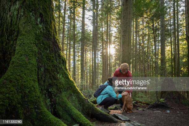 teenaged girl and boy with vizsla dog in sunlit forest - canine stock pictures, royalty-free photos & images