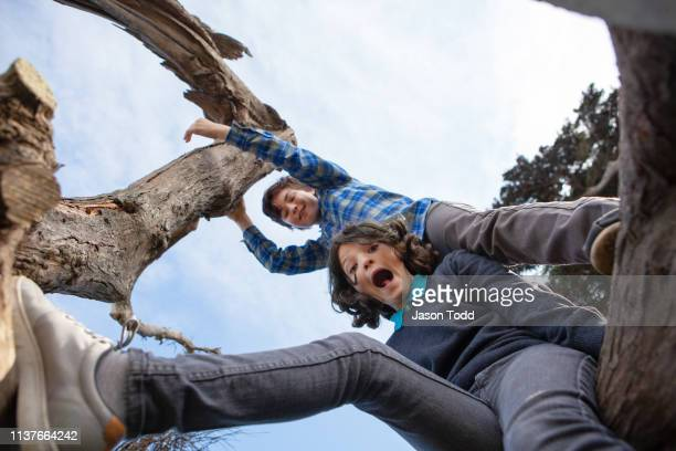 teenager and preteen boy with moth open in surprise sitting and climbing in coastal cypress tree from low angle - jason todd stock photos and pictures