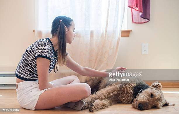 Teenager girl and airedale terrier dognext the windows