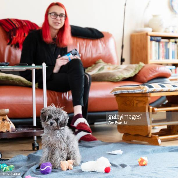 teenager girl with bright red-painted hair playing with a puppy dog in a living room - barboncino nano foto e immagini stock