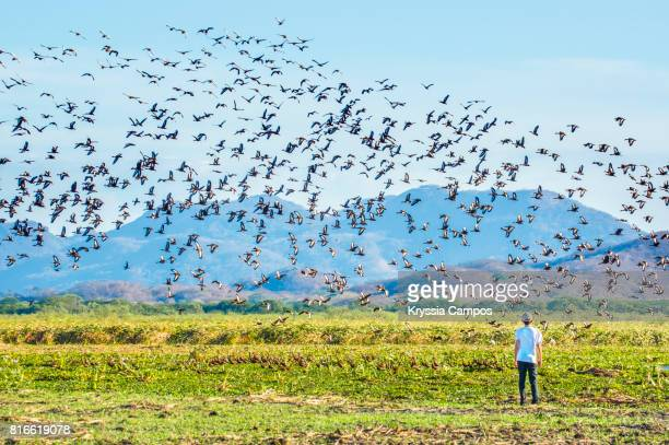 Teenager observing Black-Bellied Whistling Duck (Dendrocygna Autumnalis), Costa Rica