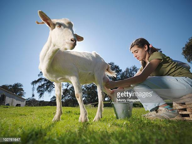 Teenagers milking a white goat