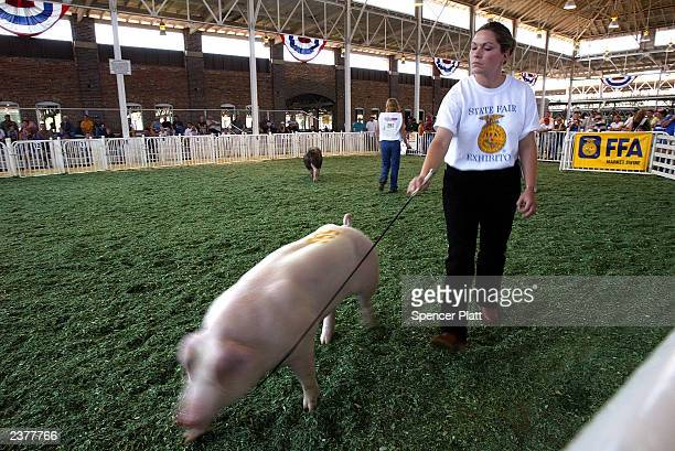 Teens participate in a 4H sow contest on the first day of the 2003 Iowa State Fair August 7 2003 in Des Moines Iowa Thousands of people attend the...
