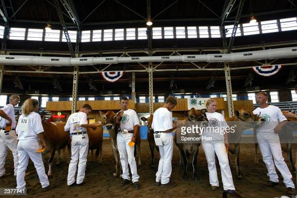 Teens wait to be judged in a 4H cow contest on the first day of the 2003 Iowa State Fair August 7 2003 in Des Moines Iowa Thousands of people attend...