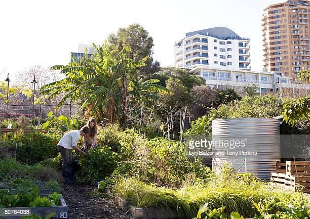 Teens working in an urban community Garden