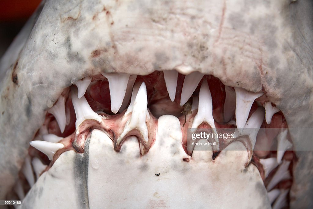 Great White Sharks Mouth