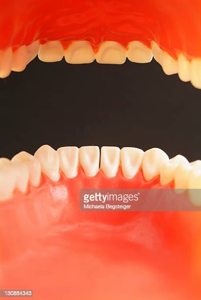 Teeth, oral cavity