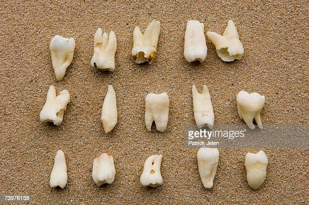 teeth - human teeth stock pictures, royalty-free photos & images