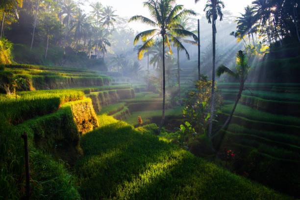 Ubud Bali, Indonesia Ubud Bali, Indonesia
