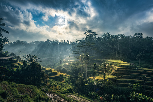 Tegallalang Rice Terraces, Bali, Indonesia - gettyimageskorea