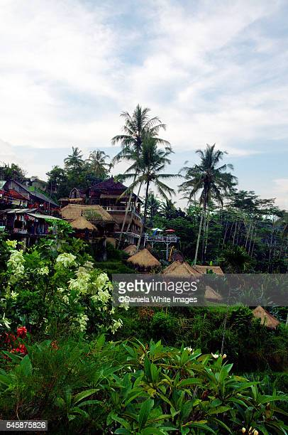 tegallalang rice terraces in ubud - rice terrace stockfoto's en -beelden