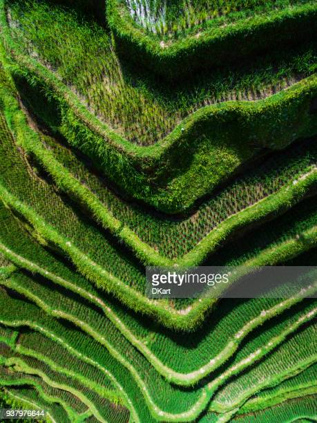 tegallalang rice terraces - rice terrace stockfoto's en -beelden