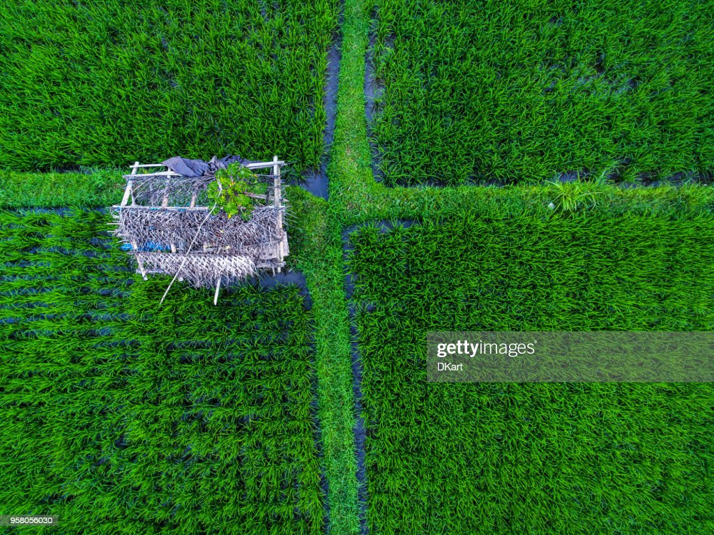 Tegallalang Rice Terrassen : Stock-Foto