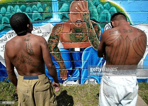 Two unidentified members of the Mara Salvatrucha MS13 show their tatoos in front of a graffiti with a message that reads we ask the Honduran people...