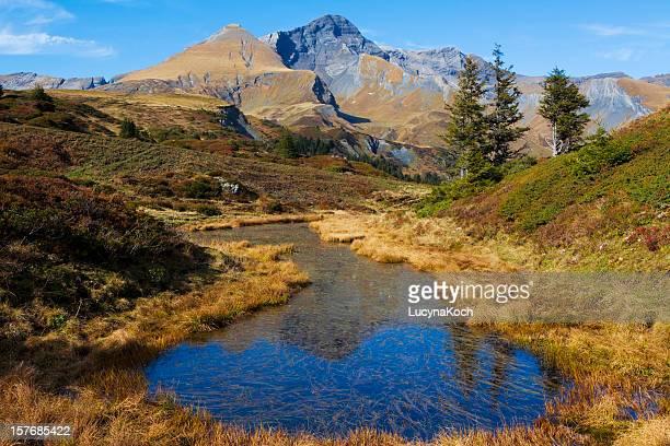 Pond life mit Schwarzhorn und Gemschiberg