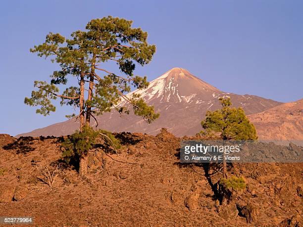 teide volcano and trees - alamany fotografías e imágenes de stock