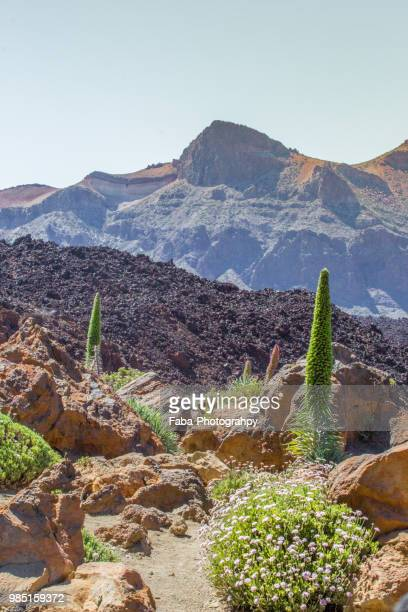 teide volcano in tenerife nationalpark - el teide national park stock pictures, royalty-free photos & images