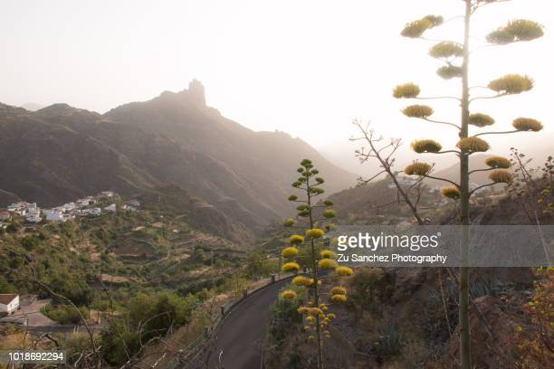 tejeda,  canary islands - tejeda stock pictures, royalty-free photos & images