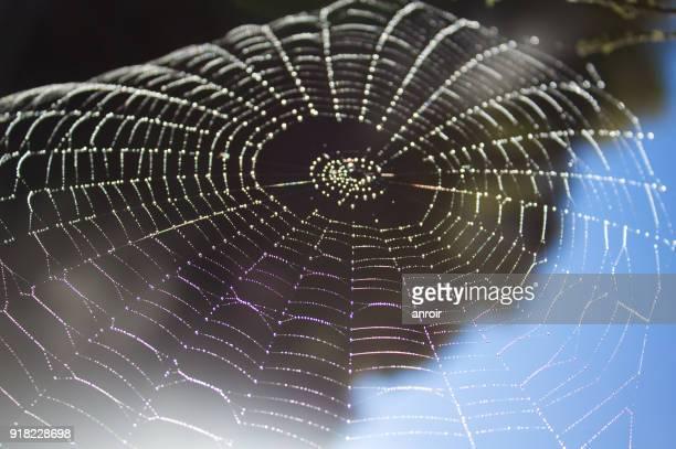 Tela de araña en Waimangu