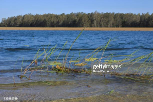 telegraph point lake australia - rafael ben ari stock pictures, royalty-free photos & images