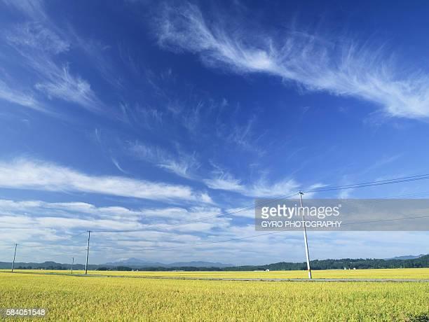 Telegraph pole over wheat field, Daisen, Akita Prefecture, Japan